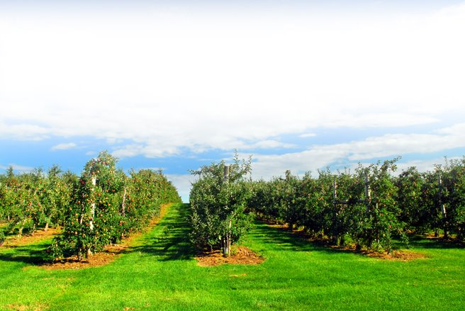 honey pot hill orchards Honey pot hill orchards, has been a family owned and operated farm since 1926 we are committed to creating a fun family-friendly atmosphere and providing a variety of orchard treats and activities.