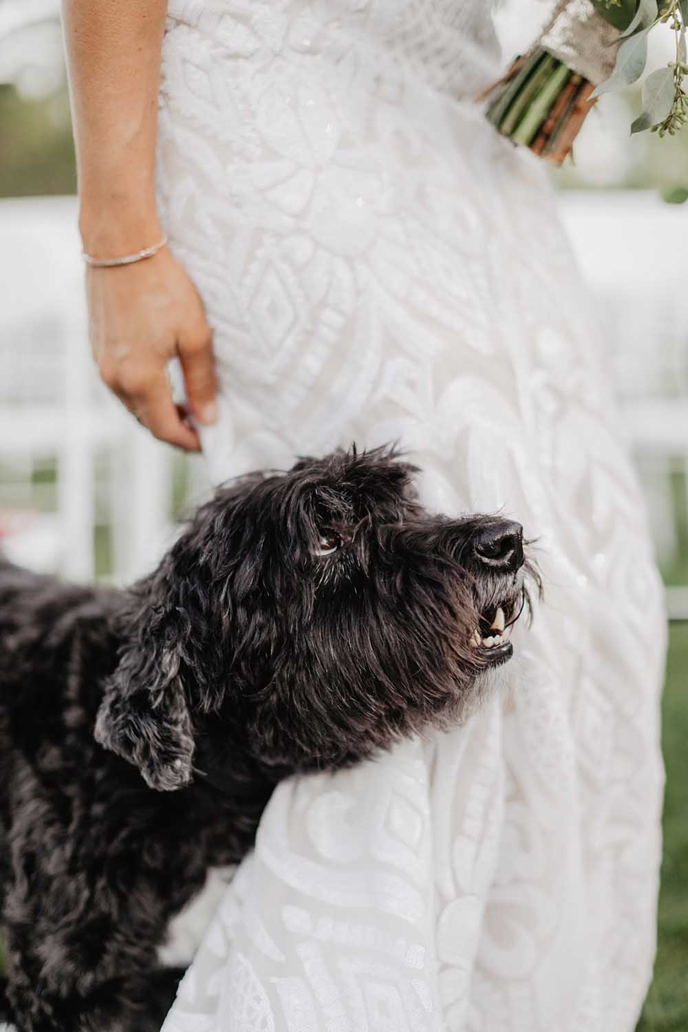 Dog Looking Up to Bride | photo by Emily Green Photography | featured on I Do Y'all