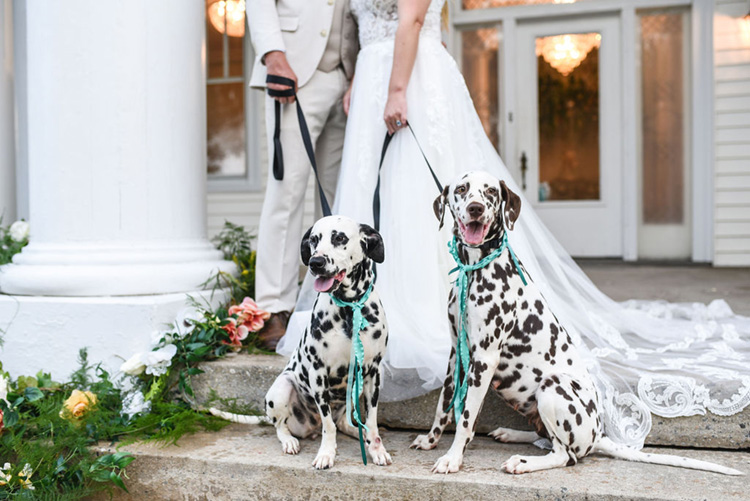 Dalmatians at Carolina Elopement with Ribbon Collars | photo by Radiant Photography by Sydney Danielle