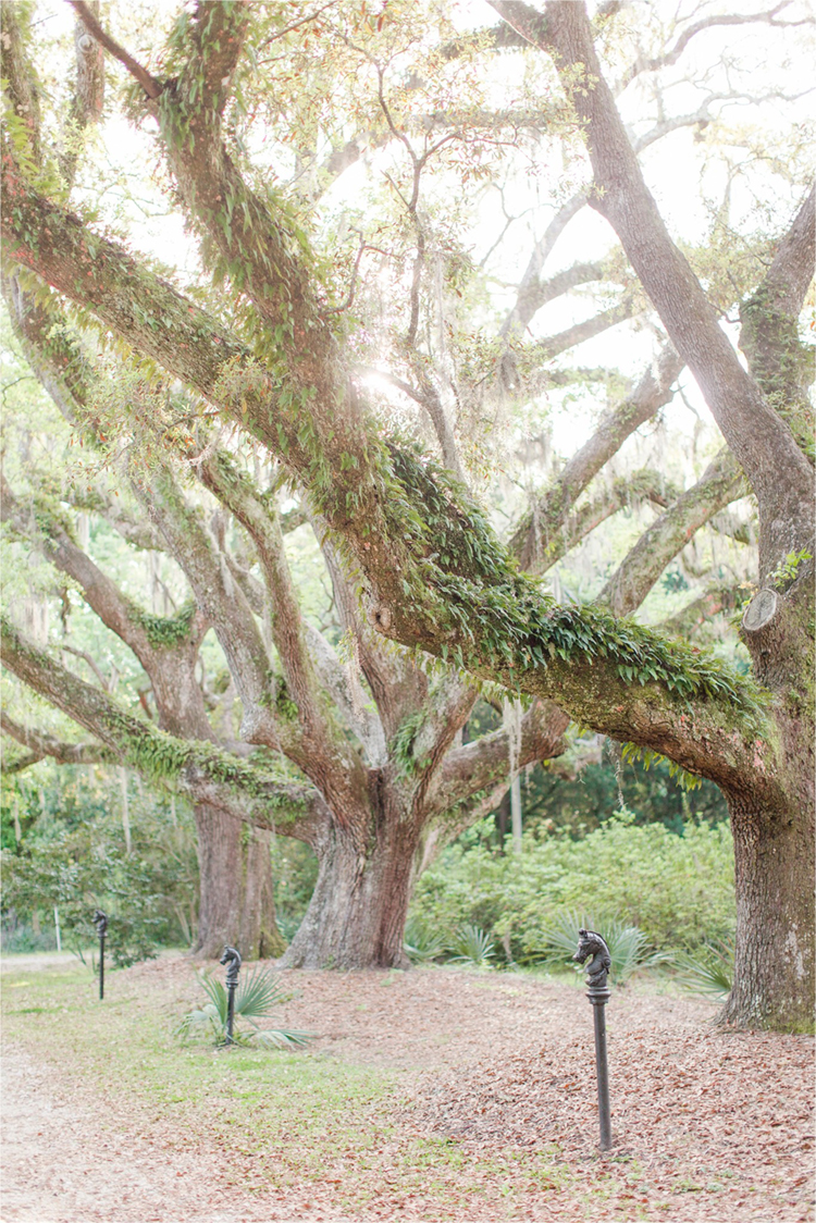 Large Oak Trees with Spanish Moss at Swift-Coles Historic Home | photo by Anna Filly Photography